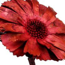 Repens Rosette Erica 8cm - 9cm 25szt.