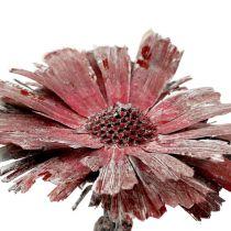 Protea rozeta erica szroniona Ø8-9cm 25szt.