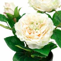 Piwonia w doniczce, romantyczna róża dekoracyjna, kwiat jedwabny kremowo-biały
