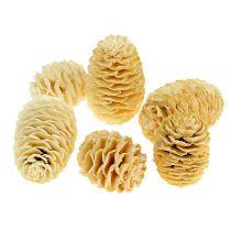 Sabulosum szyszki bielone 500g