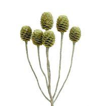 Sabulosum gałązka 4-6 zielona szroniona 25szt.