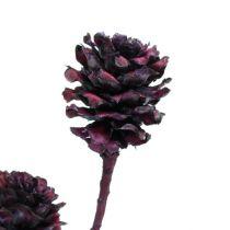 Salignum gałązki z szyszkami Bordeaux 25szt.