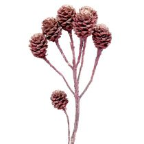 Salignum jeżynowe mrożone 25szt.