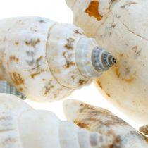Dekoracyjne muszle ślimaków puste w siatce rafii ślimaki morskie 400g