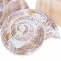 Muszla ślimaka biała umyta mała 250g