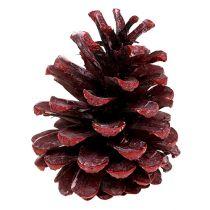 Szyszki sosnowe czarne czerwone szronione 5-7cm 1kg