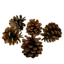 Szyszki sosnowe czarne Natura 5kg
