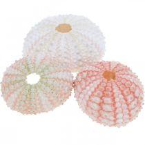 Dekoracje jeżowce morskie morskie różowe, białe, zielone letnie dekoracje 12szt.