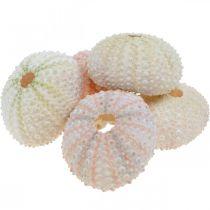 Dekoracja marynistyczna obudowa jeżowca różowa, biała dekoracja rozproszona 55szt.