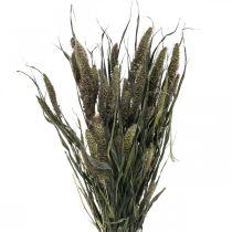 Suszone kwiaty Setaria Anthracite Nature Bristle Millet Bundle 100g