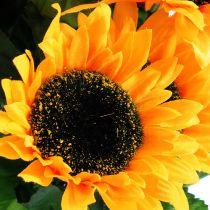 Krzew słonecznika 40cm