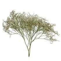 Lilak plażowy, Statice Tatarica, Lawenda morska, Limonium, Suszone kwiaty 1 kg naturalny