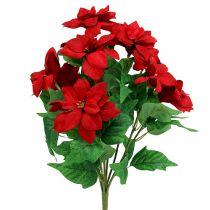 Bukiet poinsettia czerwony L47cm
