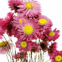 Truskawka w pęczku Kwiaty suszone różowe 25g