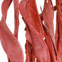 Strelitzia Liście czerwone szronione suszone kwiatowe 45-80cm 10szt.