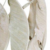 Strelitzia liście białe myte suszone 45-80cm 10szt.