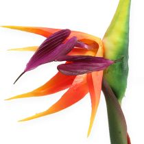 Strelitzia Bird of Paradise Flower 62cm