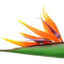 Strelitzia ptak rajski kwiat 95cm