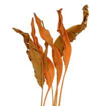 Liście Strelitzii pomarańczowe 120cm 20szt