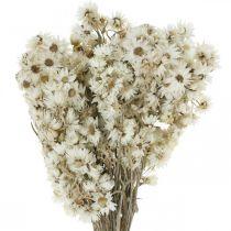 Suszone Kwiaty Truskawki Bukiet Biały Mały 15g