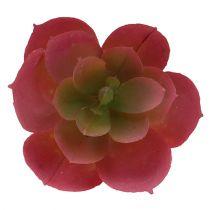 Sukulent Ø5cm Różowy 6szt