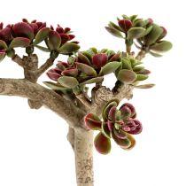 Sukulent L 20cm zielono-purpurowy