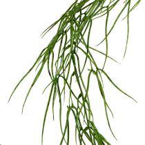 Sukulent wiszący zielony 145cm
