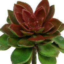Soczysta kamienna róża 6cm zielona 6szt