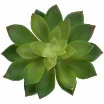 Succulent Houseleek Zielony 14cm
