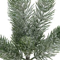 Jodła zielona gałązka 30cm 3szt
