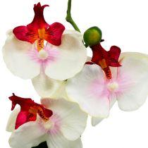 Dekoracja stołu Orchidea w doniczce kremowa H29cm