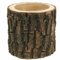 Wiąz doniczkowy drewno Ø16-18cm W15cm