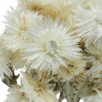 Suszone kwiaty czapeczka kwiaty naturalne białe, kwiaty słomkowe, bukiet suszonych kwiatów H33cm