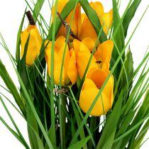 Tulipany w Doniczce Żółte 30cm
