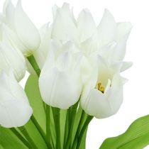 Krzew tulipanowy biały 30 cm