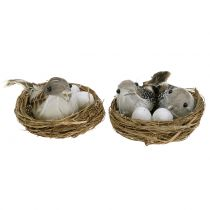 Gniazdo ptaka z jajkami i ptakiem 6szt