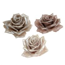 Róża woskowa Champagne Mix Ø10cm 6szt.