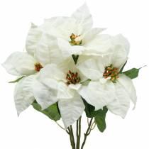 Bukiet poinsettia biały 52cm