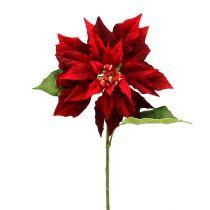 Gwiazdka świąteczna czerwony 70 cm