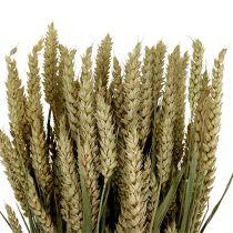 Pszenica Bund Natur 1St ozdobna pszenica