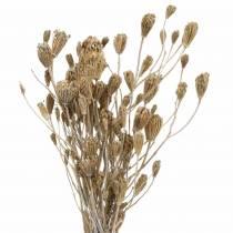 Krwawnik pęczek natura, biały płukany 30-60cm 150g