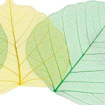 Wierzba szkieletowa jabłko zielona/żółta 200szt.