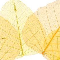 Liście wierzby szkieletowej żółte, pomarańczowe 200szt.
