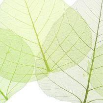 Liście wierzby szkieletowej zielone asortyment 200szt.