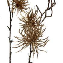 Witch Hazel Gold z brokatem 50cm