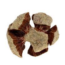 Szyszki cyprysowe natura 3cm 500g