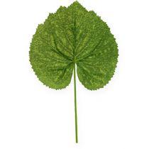 Liście roślin ozdobnych Galax W10cm L22cm 24szt