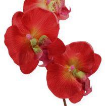 Deco Orchidea Czerwona 68cm