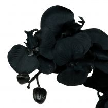 Orchidea do dekoracji czarna 54cm