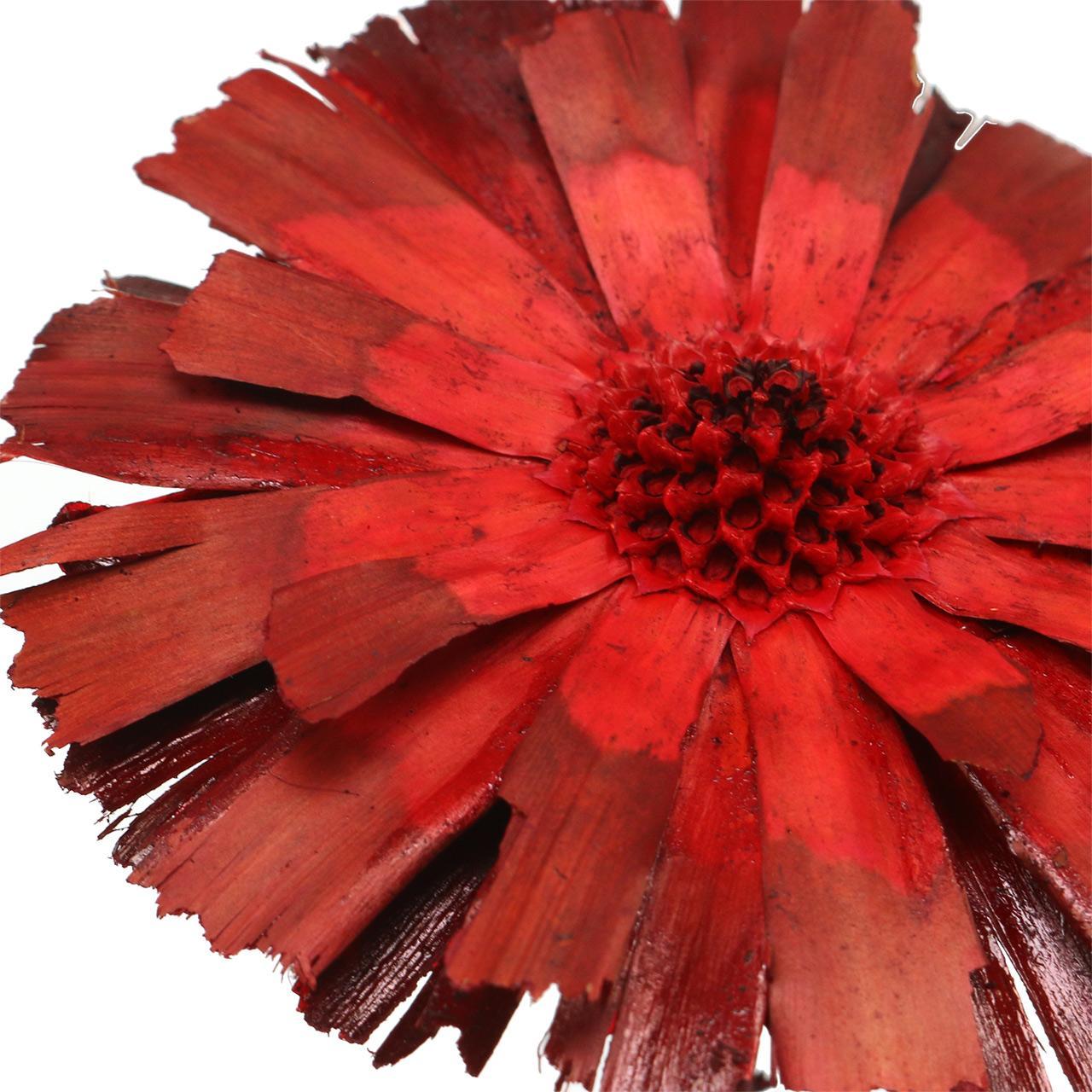 Repens Rozeta czerwona 8cm - 9cm 25szt.